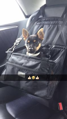 In his car seat #Baxter #Jackchi #puppy
