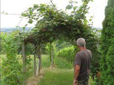 Az őstermelő szemével: így termeld a kivit házikertben   Hobbikert Magazin Fruit