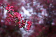 magenta spring flowers lights background