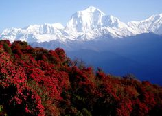 Nepal is famous place for trekking and tour .