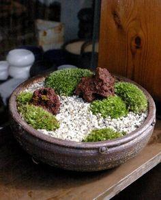 Moss Landscape Bonsai Forest, Bonsai Garden, Moss Terrarium, Terrariums, Micro Garden, Moss Plant, Mame Bonsai, Crystal Garden, Dish Garden