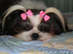 Puppy Dog Bows 20 Extra Small to Small All Pairs by PuppyDogBows, $8.99