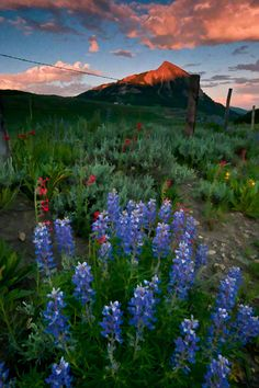 Mount Crested Butte from Washington Gulch near the town of Crested Butte, Colorado