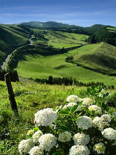 Island Faial, Azores (Portugal) - beautiful verdant space below the volcanic mountains