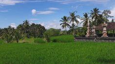 Ubud surroundings