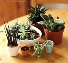 I love plants and I love succulents especially! Their shapes, colors and unusual looks always make me happy and amazed at the same time. I'...