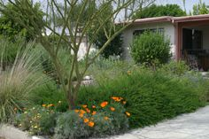 xeriscaping ideas  I like the tall grasses