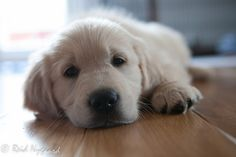 cute puppy by Reid Nygaard