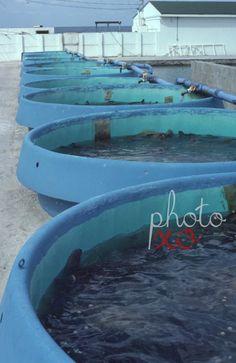 New to photoxo: Aquaculture 1981