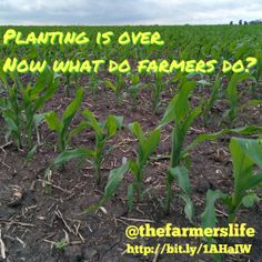 Planting is over. Now what do farmers do? - The Farmer's Life