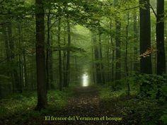El frescor del verano en el bosque.