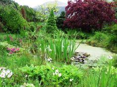 wild garden ideas - Google zoeken