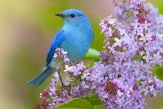 紫の花と青い鳥の壁紙 | 壁紙キングダム PC・デスクトップ版