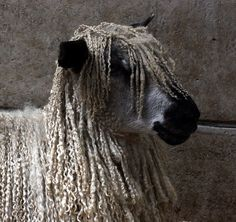 Rasta sheep!!      by The Big Sister, via Flickr