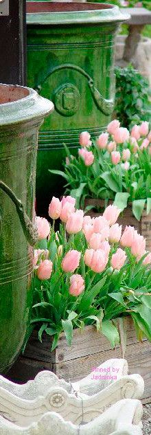 Happy Spring, Spring Day, Pink Garden, Garden Pots, Beautiful Gardens, Beautiful Flowers, Spring Scene, Light Spring, Pink Tulips