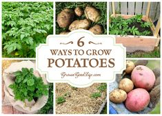 Whether you growing potatoes for fresh eating or planting a large crop for winter food storage, here are six ways to grow potatoes in your garden.