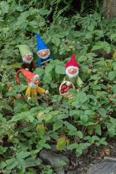 Zipf Zapf Zepf und Zipfelwitz im Erdbeerparadies Felt Crafts, Gnomes, Make Me Smile, Norway, Kindergarten, Meditation, Fairy, Mini Mini, Christmas Ornaments