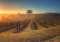 Vinhedos na Austrália | Foto por Steve Mcdermott