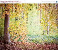 ON SALE Nature Photography, Dreamy Woodland Forest Tree Art Print, Autumn Fine Art Photograph, Orange - Hush (8x10)