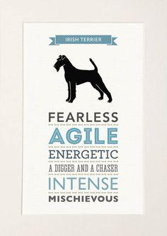 Irish Terrier Dog Breed Traits Print