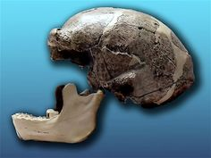 Mystery of the Lost Peking Man Fossils Solved?: Hominid Hunting Blog - Smithsonian.com (Photo: Wikicommons)