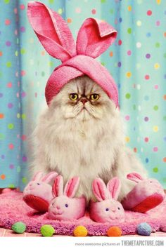 Easter cat…