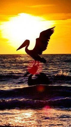 Naples, Sunset, Florida, United States
