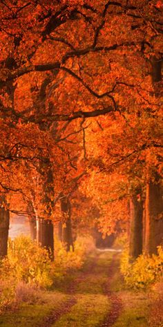 Autumn in the woods...