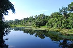 Amazon Rainforest Pictures. Peruvian Rainforest, Amazon. Photo: Ivan Mlinaric