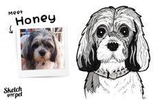 Meet Honey #petportrait #art #illustration #petsketch #dogsketch #dogs #pencilsketch