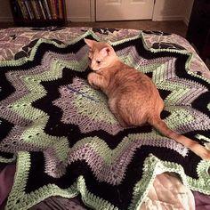 #Cat for scale. #crochet #wip #12point #crochetgeek #afghan #yarn #catsofinstagram #Caturday by cindyinphoenix