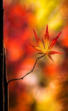 One perfect autumn leaf.