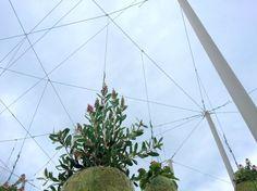 Loos van Vliet - Green Cloud Garden, Allariz International Gardens Festival 2016 Festival 2016, Gardens, Van, Clouds, Plants, Projects, Log Projects, Blue Prints, Outdoor Gardens