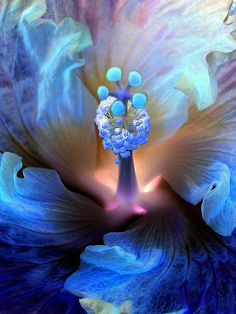 Amazing Mystic hibiscus