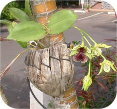 mounting orchids - Google Search