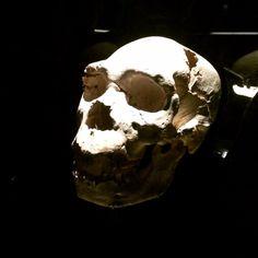Museo Evolución Humana Burgos #turismofamiliar http://familiayturismo.com/experiencia/museo-de-la-evolucion-humana-103