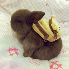 Im ready for an adventure! Its a bunny... with a mini backpack, A BACKPACK! SO CUTE!!!