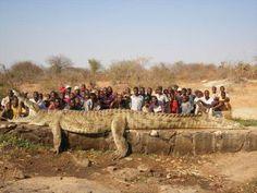 Mammoth Crocodile