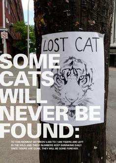 WWF special galleries - Tiger Posters - Lost Cat, Tania Dallaire & Elena Viltovskaia, Canada