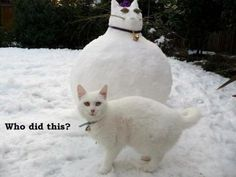 Cute and Funny Pictures and more: Snow Cat  !