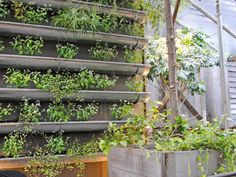 Vertical vegetable garden design plans pdf hanging ideas indoor plants architectures enchanting creative of Vertical Vegetable Gardens, Gutter Garden, Vertical Garden Design, Vertical Garden Diy, Vegetable Garden Design, Herb Garden, Easy Garden, Balcony Garden, Vegetable Gardening