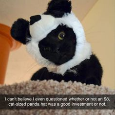 BEWARE: Funny Animals! - 24 Pics
