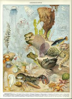 OCEANOGRAPHY  Vintage ANIMAL poster  French by FolieduJour on Etsy, $19.00
