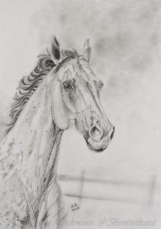 Horse. Drawing in graphite. Pferd. Zeichnung mit Bleistift