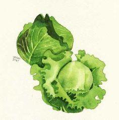 lettuce watercolor