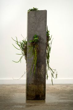 The Path of Least Resistance was a sculptural installation and photographic series created for exhibition at MOP Projects, Sydney in November Cement Art, Concrete Art, Concrete Garden, Concrete Planters, Gravel Garden, Garden Planters, Indoor Garden, Moss Garden, Concrete Crafts