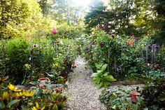 Inside Frances Palmer's Dahlia Garden - WSJ.com