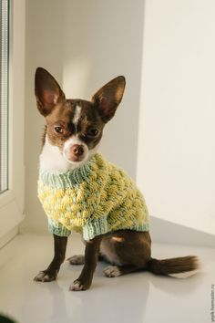 Cute knitted sweater for a dog | Купить свитер для собаки - желтый, Свитер для собак, свитер для собаки, свитер для кошки, одежда для животных Chihuahua Love, Dog Sweaters, Crochet, Boston Terrier, Cute Dogs, Dogs And Puppies, Crafts, Animals, Embroidery