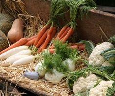 Tous les légumes de saison au mois de janvier. Des idées de recettes pour le mois de janvier