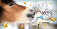 Happy New Year from FEI.org